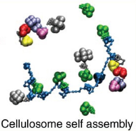 Multi-scale modeling in the cellulosome-2