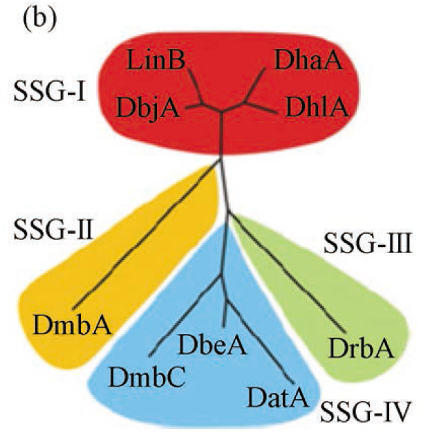 Dendrogram indicating  HLDs classification