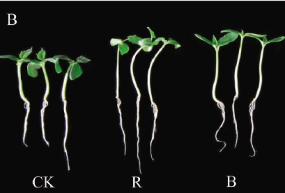 Effects of light quality on hypocotyl elongation o
